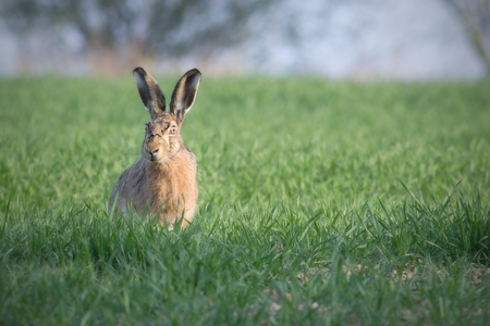 yard stick: easter bunny