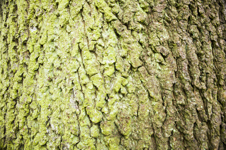 Bark and moss, wooden texture background, brown and green tree bark background. Texture. 写真素材
