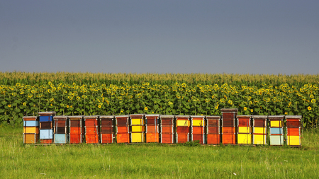 hives: Bee hives Stock Photo