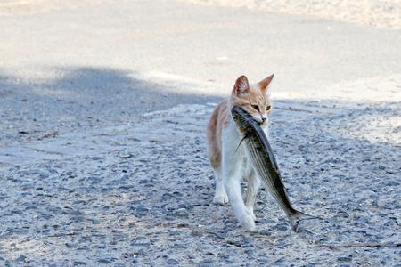 입에 물고기를 훔친 길 잃은 고양이 스톡 콘텐츠