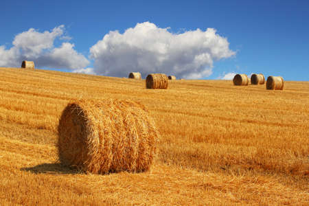 crop harvest: Hay bales