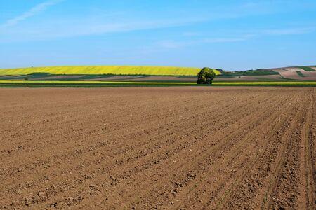 plowed: Plowed soil with nice blue sky