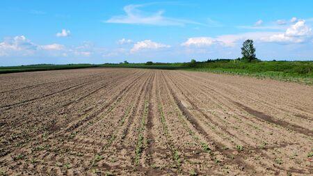 Plowed soil with nice blue sky