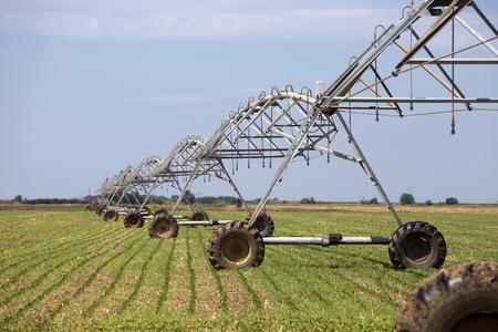 irrigation field: Sprinkler irrigation system on agriculture field