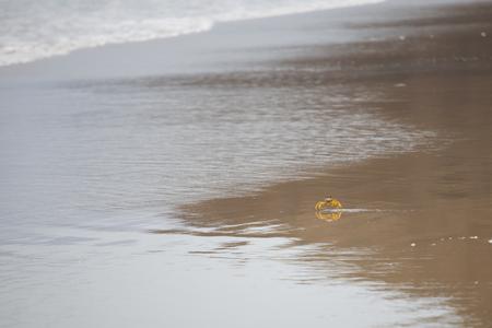 Little yellow crab on the sandy beach 스톡 콘텐츠