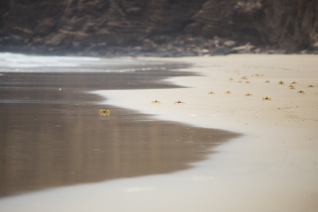 Group of little yellow crabs on the sandy beach