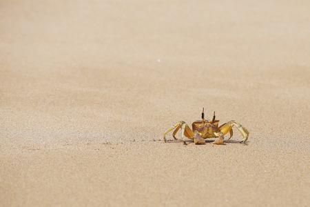 Crab on the sand beach