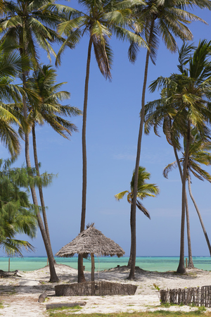 Beach resort with palm trees,Zanzibar island,Tanzania 스톡 콘텐츠