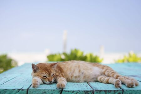 Cat laying on blue table at the beach