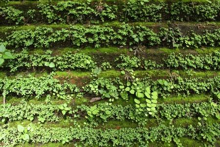 Pianta verde parete Archivio Fotografico