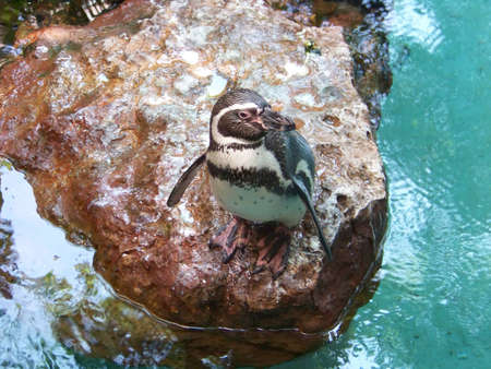 Camera-loving Penguin Фото со стока