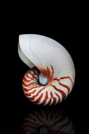 chambered: Nautilus shellfish. Stock Photo
