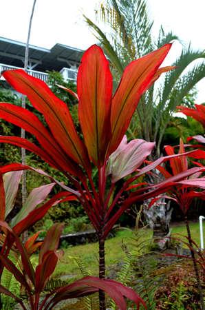 Kool palm