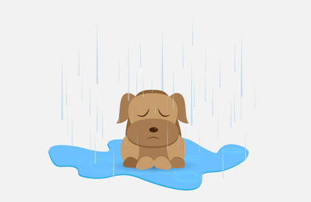 unwanted: Homeless dog in rainy day Illustration