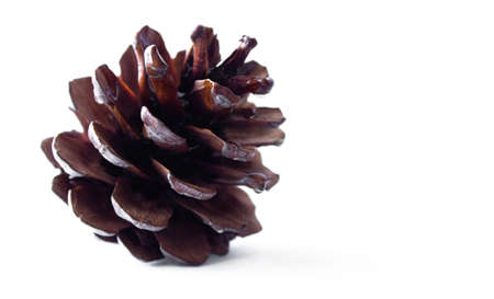 pine cone on white isolated background close up Archivio Fotografico
