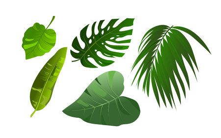 Tropical leaves of Monstera and jungle palm illustration set. Elements isolated on white background. Flat style design plants.