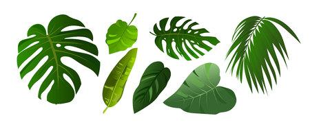 Hojas tropicales de Monstera y conjunto de ilustraciones de palmeras de la selva. Elementos aislados sobre fondo blanco. Plantas de diseño de estilo plano. Ilustración de vector