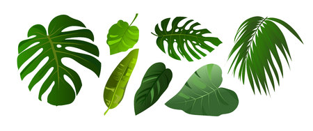 Tropical leaves of Monstera and jungle palm illustration set. Elements isolated on white background. Flat style design plants. Vector Illustration