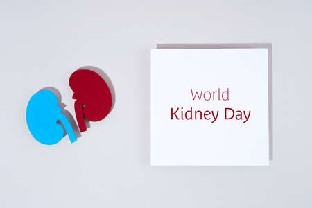 Concept Text World kidney day, handcraft paper red and blue kidneys on pastel color background