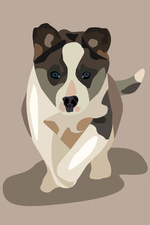 Vector gray and white dog for background