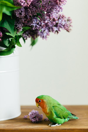 Cute parrot lovebirds sitting on a bouquet of purple lilac