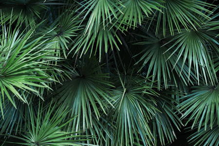 Tropical palm leaves, floral pattern background, real photo