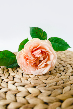 peach rose in glass vase on a nature wicker napkin on white background 版權商用圖片