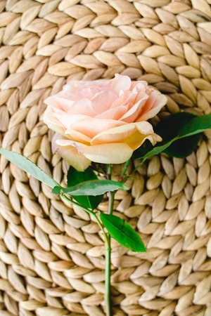 peach rose in a natural wicker napkin , nature background