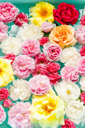 stunning floral texture of colorful roses in water on blue background, nature flowers