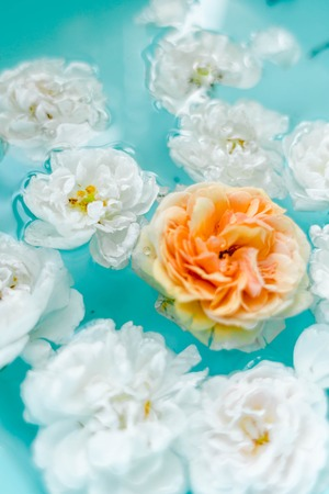 stunning floral texture of roses in water on blue background, nature flowers