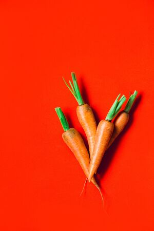 A few fresh carrots on red background. Rustic style. Farming.