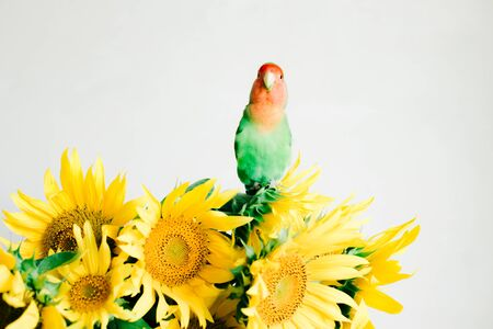bouquet of bright yellow sunflower flowers with a lovebird parrot in a retro vase