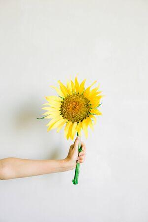 hand holding a yellow sunflower flower