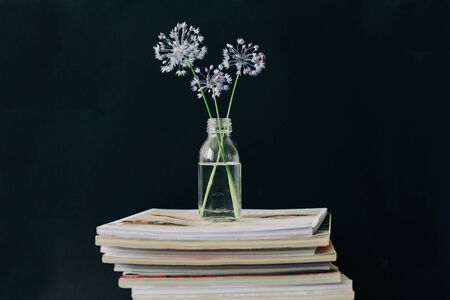 three purple round flower in a transparent glass jar on a stack of magazines on a black background. isolated