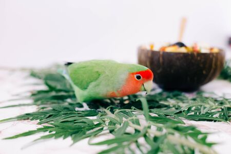 cute green lovebird parrot on tropical leaves