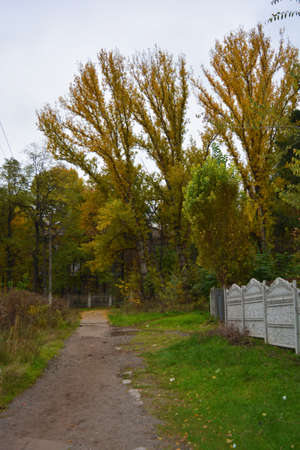 Industrial, strong urban landscape of industrial zones with natural autumn nature in the ity of Kamianske. Large vigorous yellow, red, green trees, bushes, plants growing among concrete structures, pl