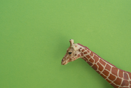 An giraffe animal is a childrens toy. Plastic figurine for the game. Green background. Farm and the zoo.