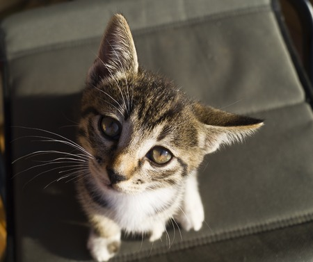 A small tabby cat is sitting on wooden boards. The kitten lies stretched out. Foot with claws. A pet is four-legged.
