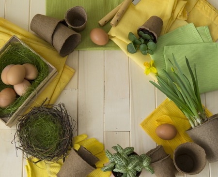 Easter eggs basket flowers spring transplant of flowers nest tools. Narcissus fittonia, succulent Wooden background.