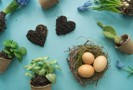 Easter top view. Details of the holiday. Blue background. Flower pot and eggs