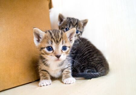 Little kittens. Room with animals. Pet Care