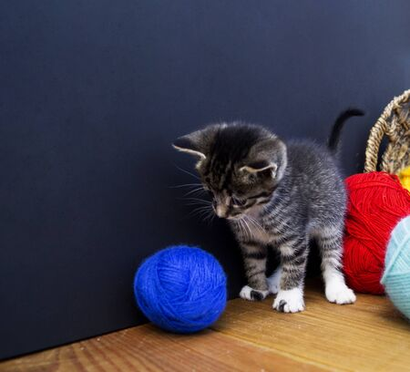 A striped kitten plays with balls of wool. Wicker basket, wooden floor and black background. Favorite homemade hobby knitting.