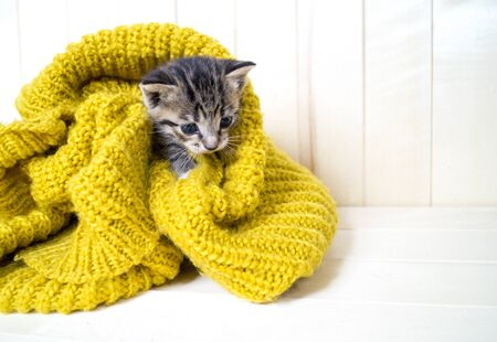 The striped kitten is wrapped in a yellow knitted scarf. The cat warms itself in the cold autumn. Pet.