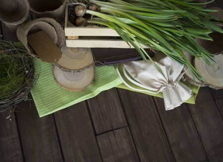 Flower transplant of daffodils. Bulbous plant. Pot and tool primer. Wood background