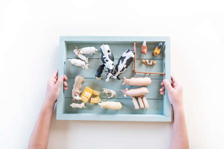 Montessori material farm animals on white