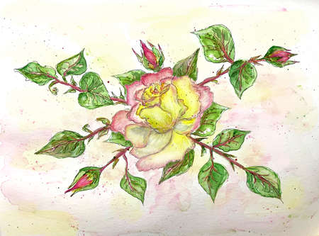 Rose with buds, watercolor illustration for greeting card