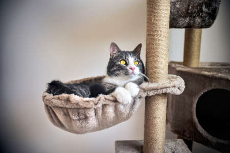 Funny striped kitten lying on the cat house