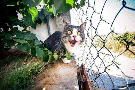 Beautiful striped kitten with green eyes sitting near fence.