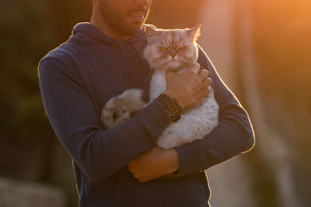Man holds his angry grumpy purebred cat outside on the sunset. Pet with owner