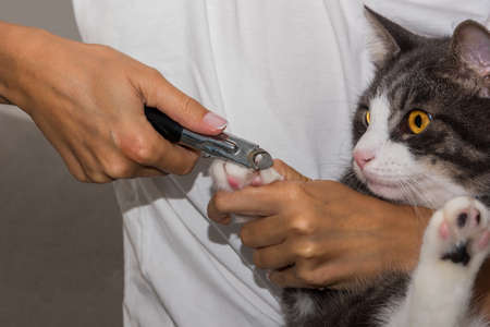 Woman cuts cats claws with clipper or trimmer. Animal Grooming. Cat claw care. Zdjęcie Seryjne